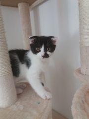Katzen Baby 3 Monate alt