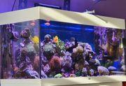Meerwasser Aquarium komplett abzugeben