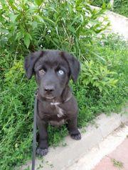 Angelo mit dem blauen Auge