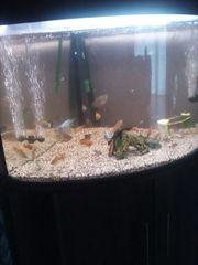 aquarium der marke juwel
