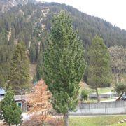 Verschiedene Bäume und Sträucher Stauden
