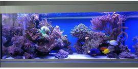 Meerwasseraquarium EHEIM Inspiria Marine mit: Kleinanzeigen aus Northeim - Rubrik Sonstige Sammlungen