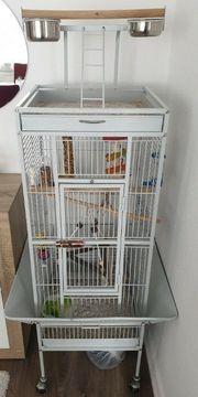 Pfirsichköpfchen zu verkaufen mit Käfig