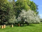 Regionaler Honig aus dem Wittelsbacher