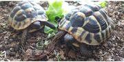 Schildkröte Terrarium