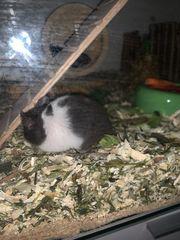Hamster mit Käfig und Zubehör