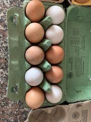 Eier Legehühner Celadon Legewachteln Wachteln