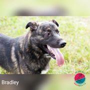 Bradley - Großes Freudenbündel sucht Familienanschluss