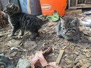 Zwei Bauernhof Kitten