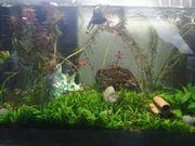 Aquarium und Zubehör
