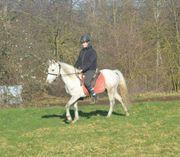 Schicke pony stute
