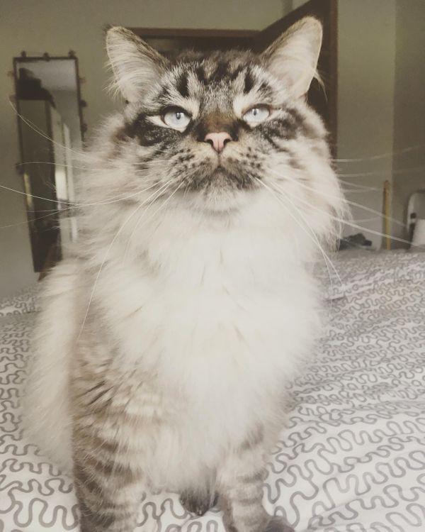 Katzen suchen liebevolles Zuhause