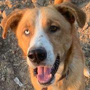 Lio vom Hundegarten Liebe auf