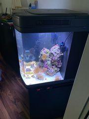 Meerwasser Sera Marine Cube