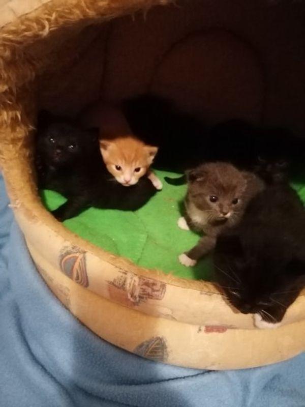 Private Auffangstation Hilfe für Katzen