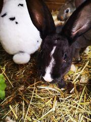 Kaninchen babys nur noch 1