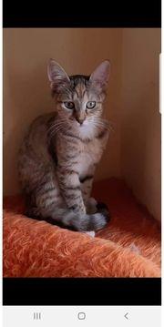 kamilia kleines liebes Katzenbaby