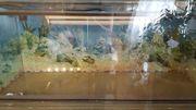 Terrarium 120x50x50cm Vollglas mit 2