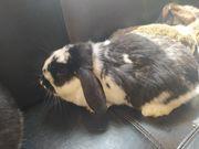 Kaninchen Paare