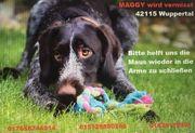 Maggy ist spurlos verschwunden Hund