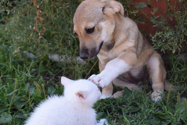 Katzenfreundliche Junge Welpen Hündin