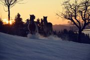 Tierbetreuer für 2 Pferde gesucht
