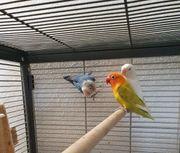 Drei wunderschöne Vögel