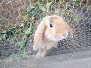 Kaninchen zu verkaufen 5 Monate