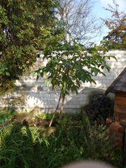 Ich möchte leben Nussbaum 3 -