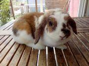 Tolle Kaninchen Mädchen abzugeben