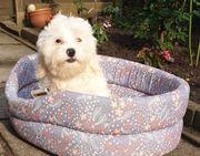 Süßer Bichon Malteser 4 Monate