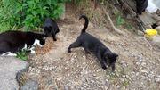 2 kleine Katzen