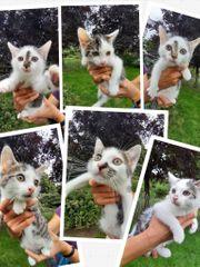 Kitten aus dem Tierschutz suchen