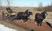 Traumhaftes Pony-Welch C-Drio zum Verkauf