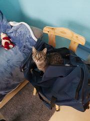 Vermisst Katze Wieder DA