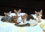 Katzenfamilie zu Vermitteln