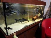 ich verkaufe meinen Aquarium komplett