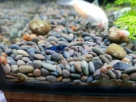 Posthornschnecken Garnelen bunt gemixt Pflanzen: Kleinanzeigen aus Reilingen - Rubrik Fische, Aquaristik
