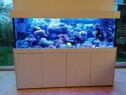 Meerwasser Aquarium Kombination ohne Tiere