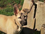 Teo - ein sehr aufgeschlossener Junghund