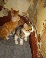 Kätzchen suchen ein neues zu