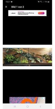 Komplettes Terrarium mit Königspython