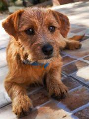 Kleine Terriermixhündin sucht ihr Zuhause
