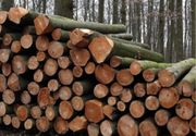 Brennholz Buche Stämme mit Anlieferung