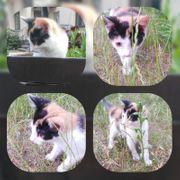 Baby Katze Abby 12 Wochen