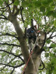 Baumarbeiten vom Fachmann - Vitalitäts Baum-Kronenpflege