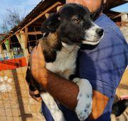 Hundejunge 6 Monate alt - der