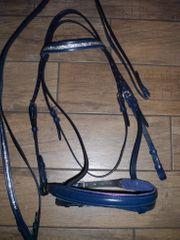 Schicke blaue Trense Zaumzeug für