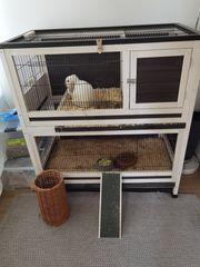 Mini lop kaninchen