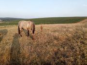 Freizeitreiter und Pferdefreunde aufgepasst